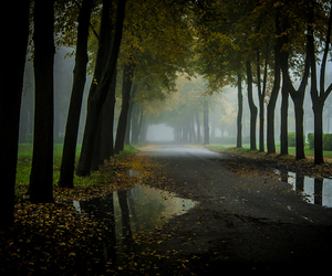 misty, trees, and park image