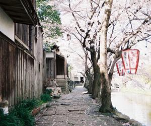 japan, tree, and flowers image