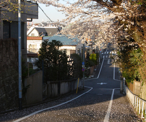 japan, street, and sakura image