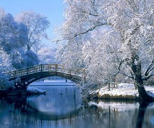 bridge, nature, and snow image