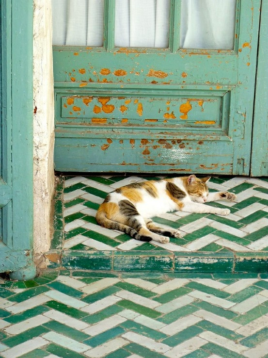 cat, green, and door image