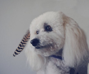 dog, feather, and cute image