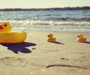 beach and duck image