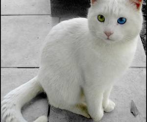 cats, cute cat, and nice cat image
