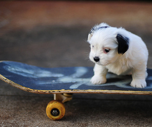 awesome, puppy, and skate image