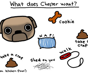 chester, dog, and naw image