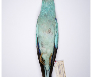 blue, photography, and ornithology image