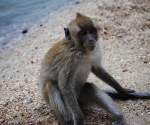 animal, ocean, and monkey image