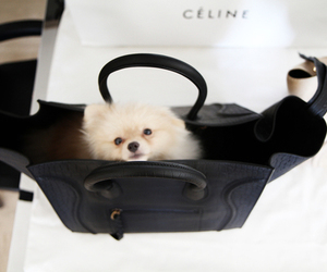 dog, cute, and fashion image
