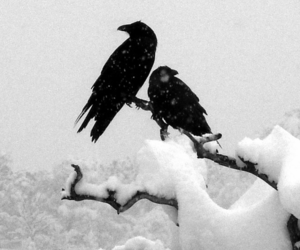 black, raven, and branch image