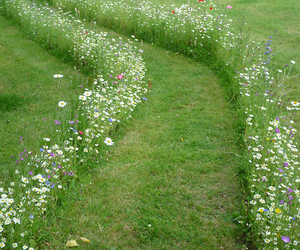 flowers, path, and soft image
