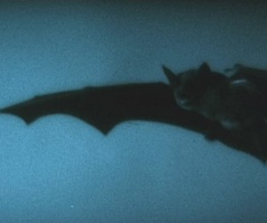 bat and blue image