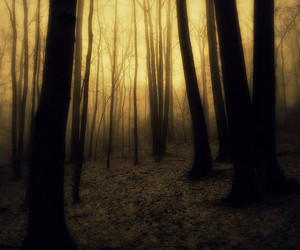 trees and woods image