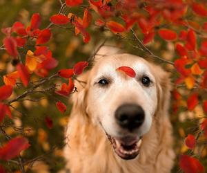 cachorro, cao, and feliz image