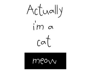 cat, meow, and quote image