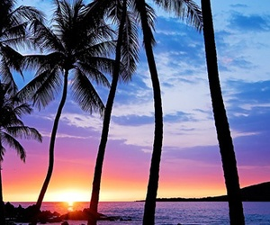 sunset, hawaii, and palms image