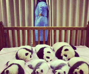 baby, panda, and cute image