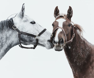 horse, animal, and kiss image