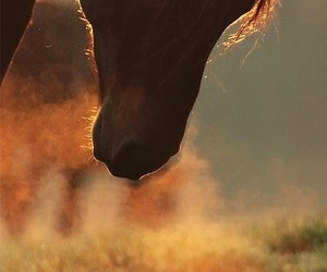 animal, hair, and horse image