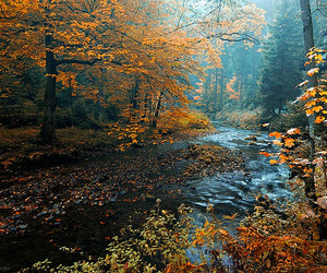 autumn, forest, and landscape image