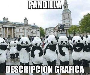 panda and pandilla image