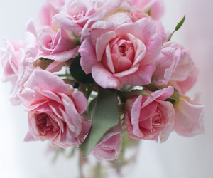 flower, roses, and freshly image