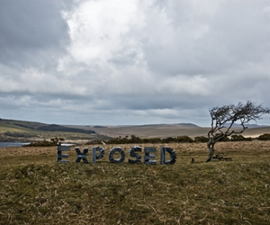 empty, tree, and exposed image