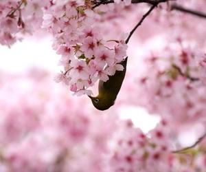 animals, cherry blossom, and nature image