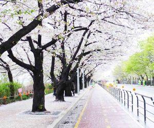 korea, love, and blossom image