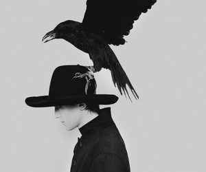 bird, black, and hat image