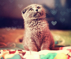 kitteh, meow, and cute kitteh image