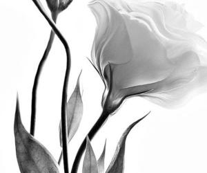 art, black & white, and black and white image