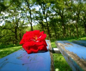 art, red, and bench image