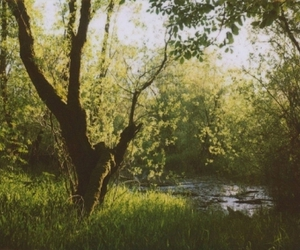 grass, nature, and trees image