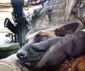 dog, soldier, and us army image