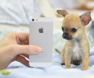 iphone, sweet, and cute image
