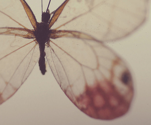 butterfly, vintage, and nature image