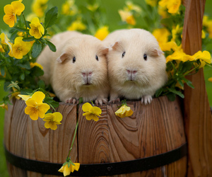 cute animals and guinea pigs image