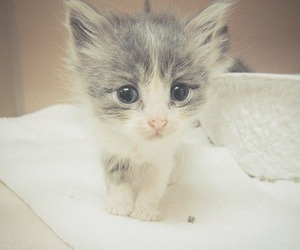 adorable, kitten, and animals image