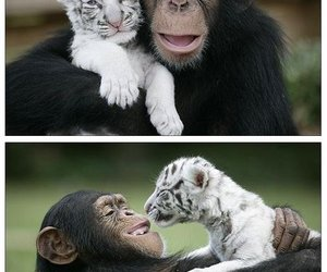 animal, cute, and monkey image