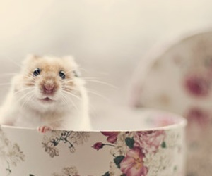 animal, hamster, and flowers image
