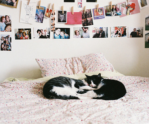 cat, bed, and photo image