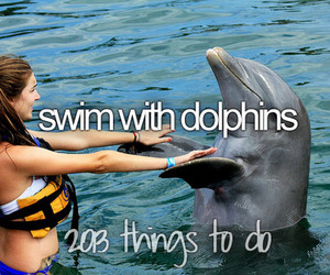 dolphin, swim, and water image