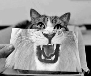 b&w, cat, and roar image