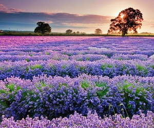 field and flower image