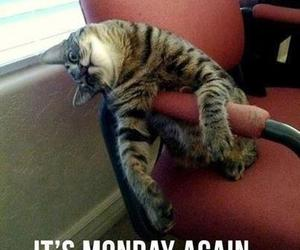 cat, monday, and funny image