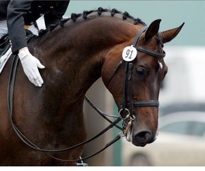 beautiful, bridle, and brown image
