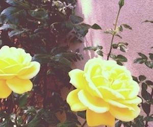 flowers, secia, and roses image