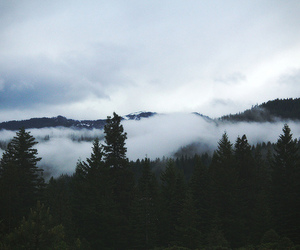 forest, nature, and landscape image