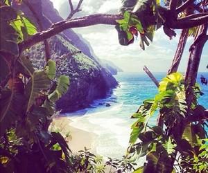 Aloha, life, and live image